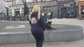 9 month old doberman, Romeo! Dog Training in London