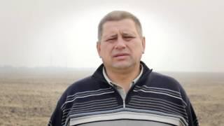 Відгук   Озима пшениця   Рівенська обл