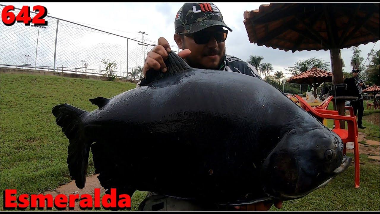 Dia de muita chuva e grandes tambas no Pesque Pague Esmeralda - Programa Fishingtur na TV 642