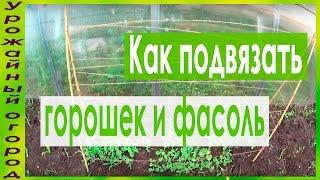 ВАРИАНТ ПОДПОРКИ ДЛЯ ГОРОШКА И ФАСОЛИ!!!