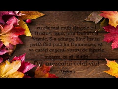 Duminică 04 Noiembrie 2018 - Marius Birgean