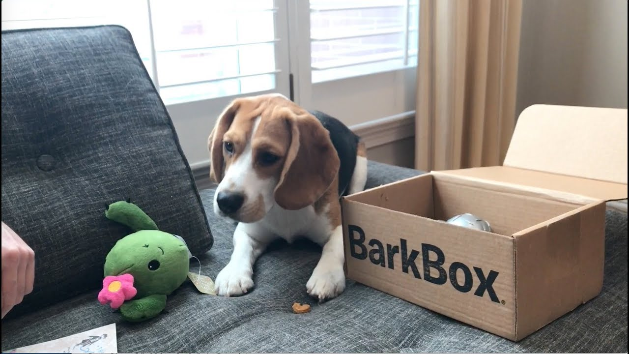 oliver opens a bark box youtube