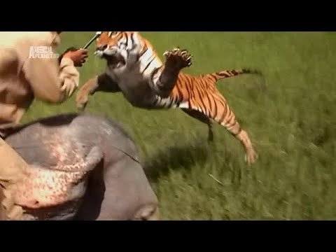 Legends of man-eating Tigers in Nepal