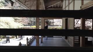 京都の桜 常照皇寺 2015年4月18日