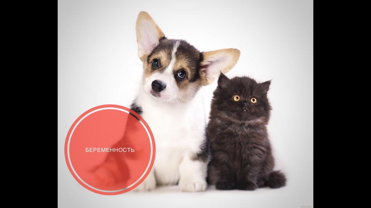 Беременность кошек и собак - YouTube