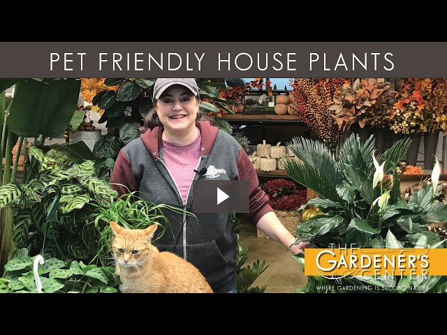 10/30/2020 House Plant Pet Friendly Tips with Joy