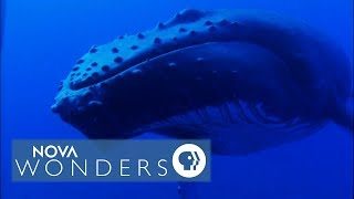 Whale Songs in the South Pacific