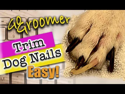 Learn how to trim Dog nails