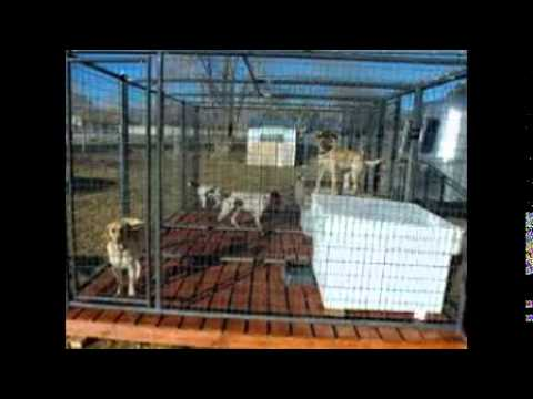 outdoor kennel flooring - youtube