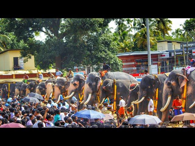 Aanayoottu 2018 at Cherai | E4 Elephant 25 ???? Kerala Elephants | Thechikottukavu Ramachandran Aana
