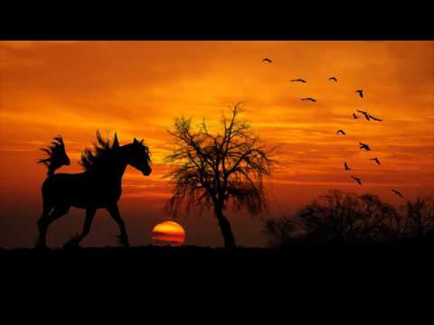 Horse walking, The relaxing sound of horses hooves 1 hour 30 minutes