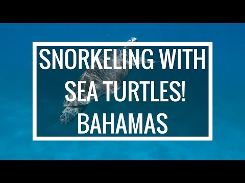 Bahamas   Snorkeling with SEA TURTLES!