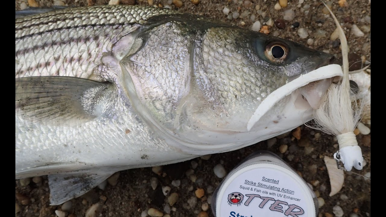 Striped bass shore fishing bucktails and otter tail bait for Striper fishing bait