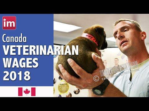 Veterinarian Salary In Canada (2018) - Employment In Canada