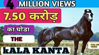 7. 50 करोड़  का  काला  काँटा  मारवाड़ी  घोड़ा  (  Marwari STALLION )  Behbal Stud Farm   |    PART-1