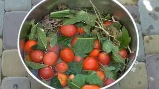 Квашеные помидоры как бочковые Засолка помидор просто и вкусно