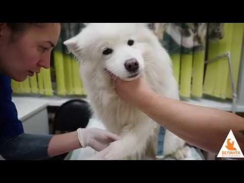 Ветеринарная клиника Беланта