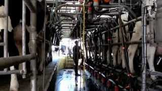 The Good Family Dairy Farm Cork Ireland