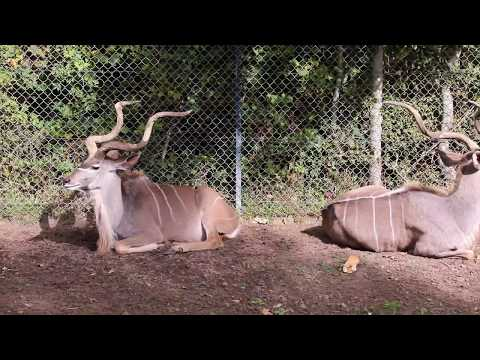 The Safari Zoo Of Thoiry, France. Watch The Animals While Staying In Your Car