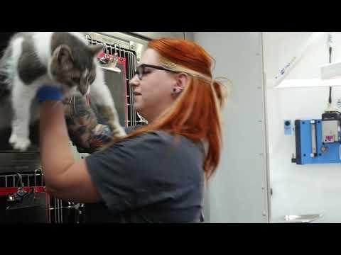 Ottawa Humane Society Mobile Spay/Neuter Clinic