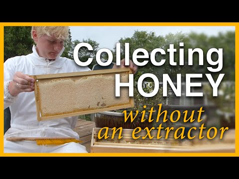 Beginning Beekeeping: Collecting Honey Without Extractor - GSB S1 E4