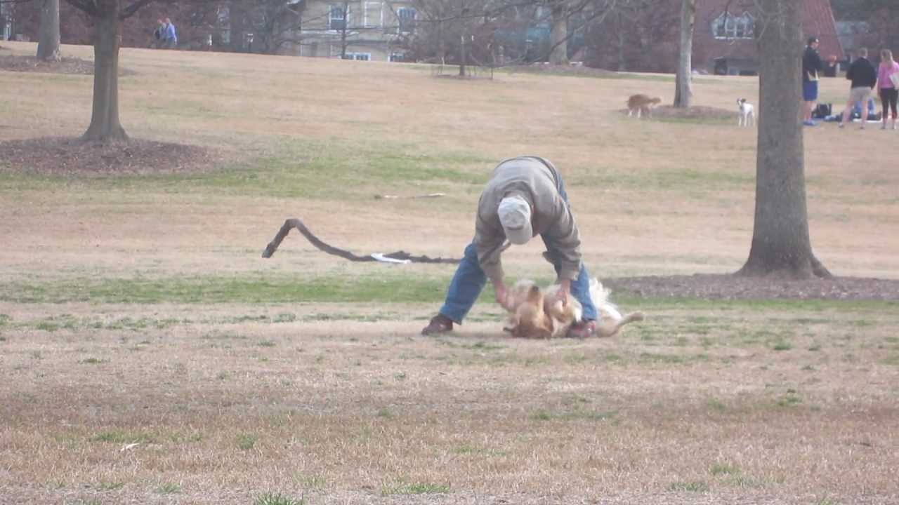 Lazy Dog Doesnt Want To Leave The Park YouTube - Dog learns to play dead so he doesnt have to leave the park