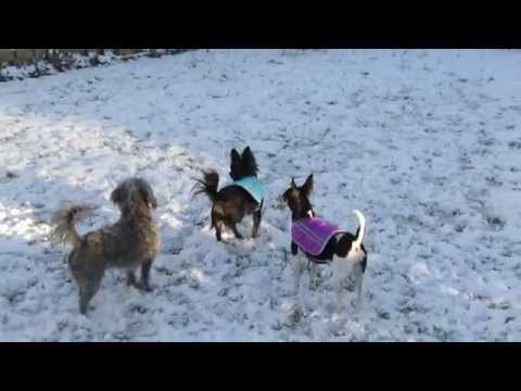 Puppies Eating Snow