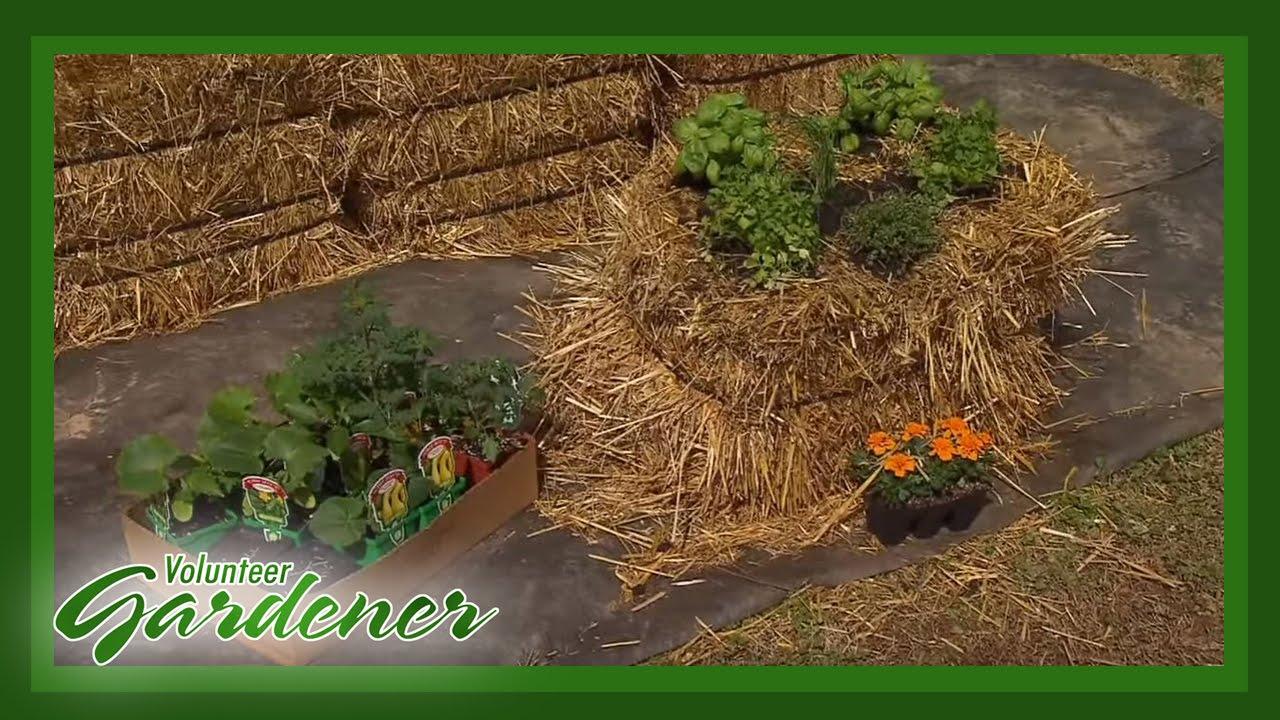 Straw Bale Gardening | Volunteer Gardener - YouTube