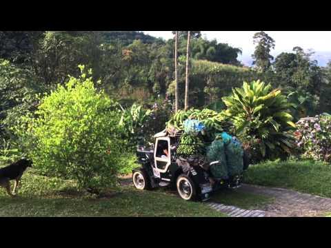 Colombia: Monte Jazmin Coffee Farm