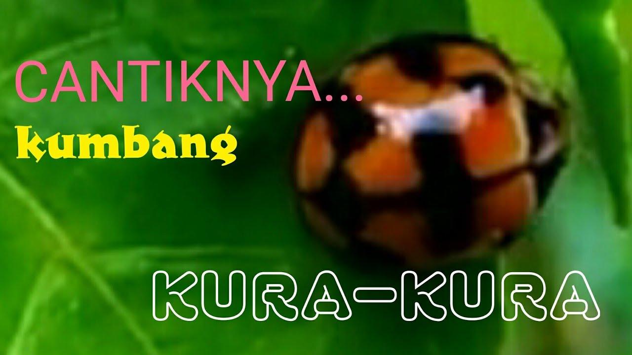 Cantiknya Kumbang Kura Kura Kepik Youtube