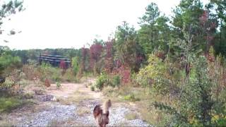 See this adventure of Scooby the Wonder Pup loose in the wild!!! By...