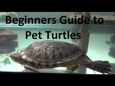 What you need to know about pet turtles!