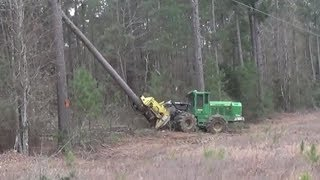 John Deere Shear Cutting Some Huge Pines!