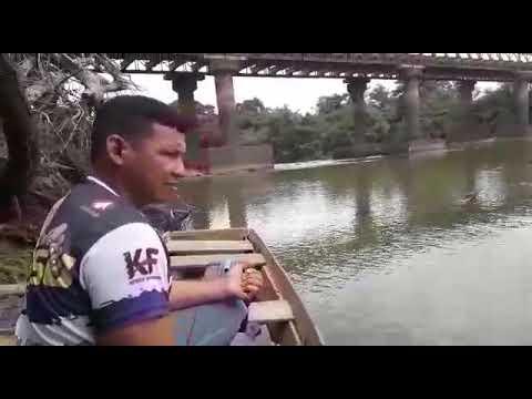 Pegando Aracu Cabeça Gorda