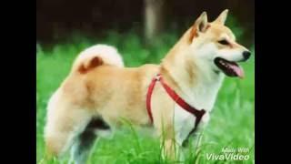 Картинки красивых собак/ 15 ноября 2016 г.
