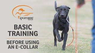Basic Training :: Before Using an ECollar