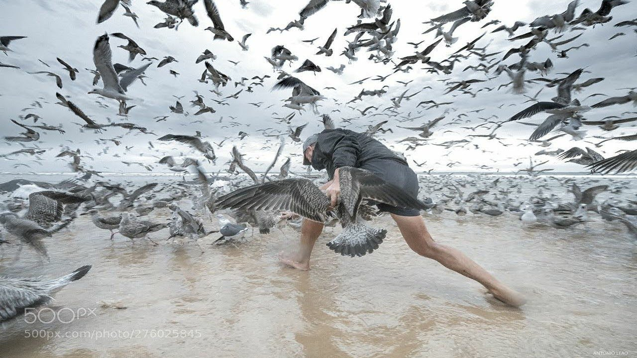 Download Birds attacking people on the beach