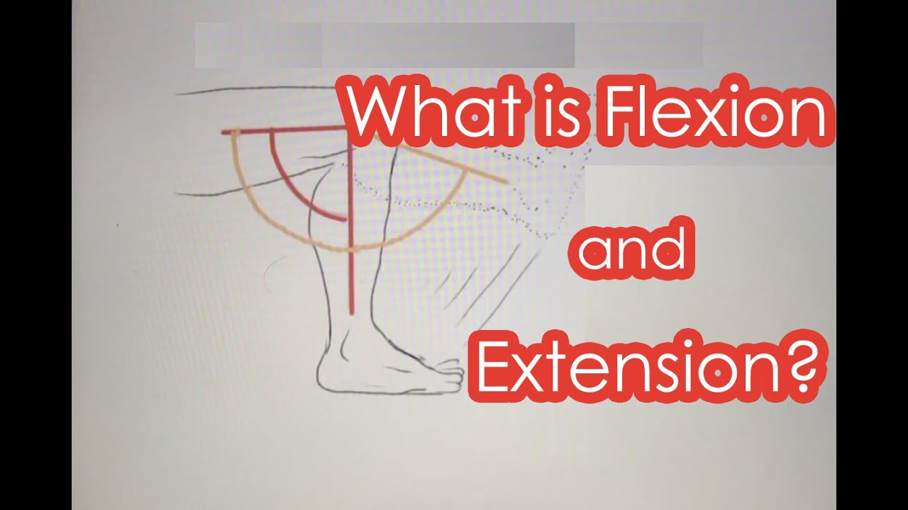 What is Flexion and Extension? - YouTube