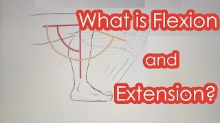 what is flexion and extension
