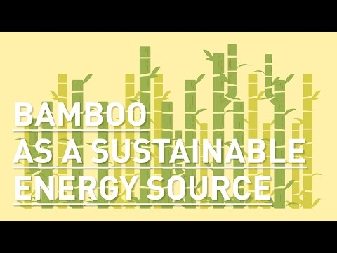 Bamboo as a sustainable energy source for Indonesia
