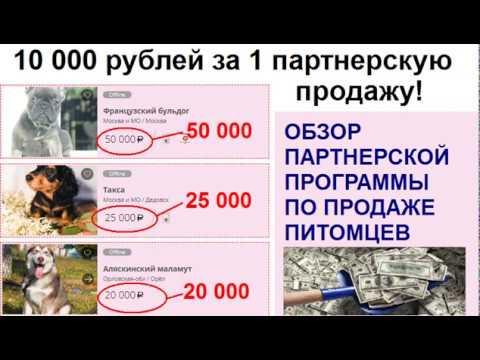 Зарабатываем на партнерской сети помощи питомцам  Пошаговая инструкция 10 000р в день   реально!