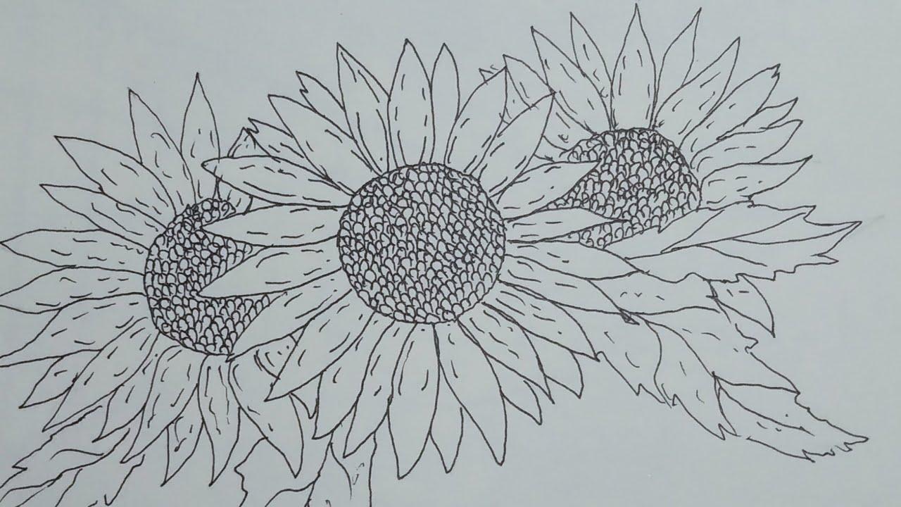 Menggambar bunga matahari - YouTube