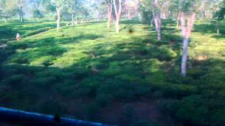 Trip To Mahur (Part-4) : Tea-Gardens