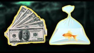 Куда продать аквариумных рыбок?
