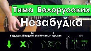 Download Тима Белорусских - Незабудка \ Разбор песни на гитаре \ Аккорды и бой Mp3 and Videos
