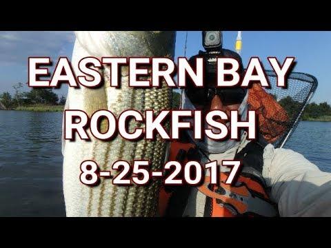 Eastern Bay Fishing 8-25-2017