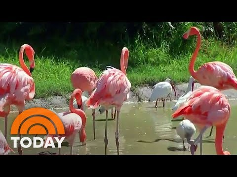 Hurricane Irma: How Will Florida's Zoo Animals Survive The Storm? | TODAY