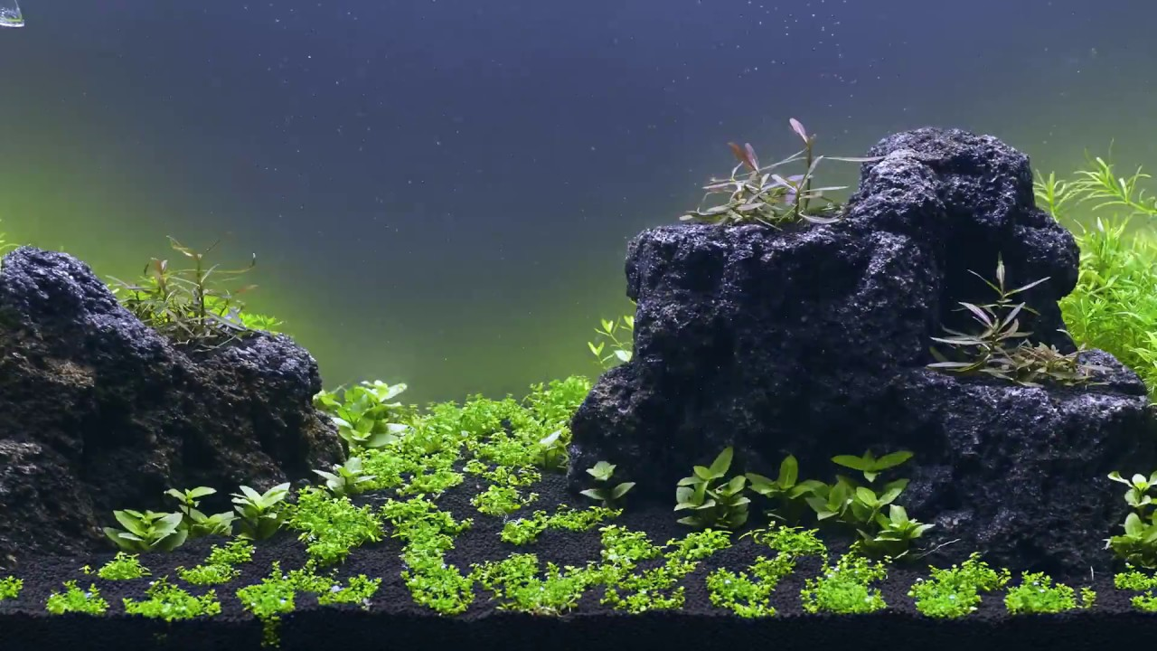 New shipment of AFA Tissue culture plants are in stock now