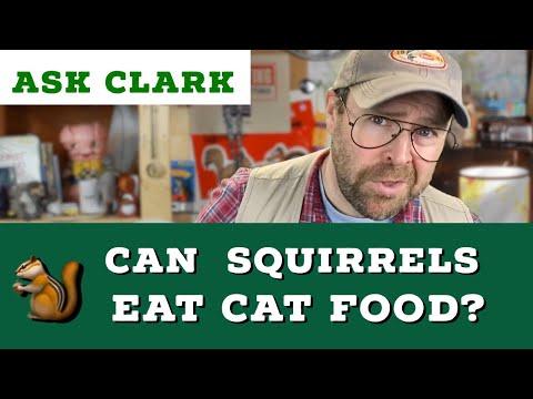 Can Squirrels Eat Cat Food?