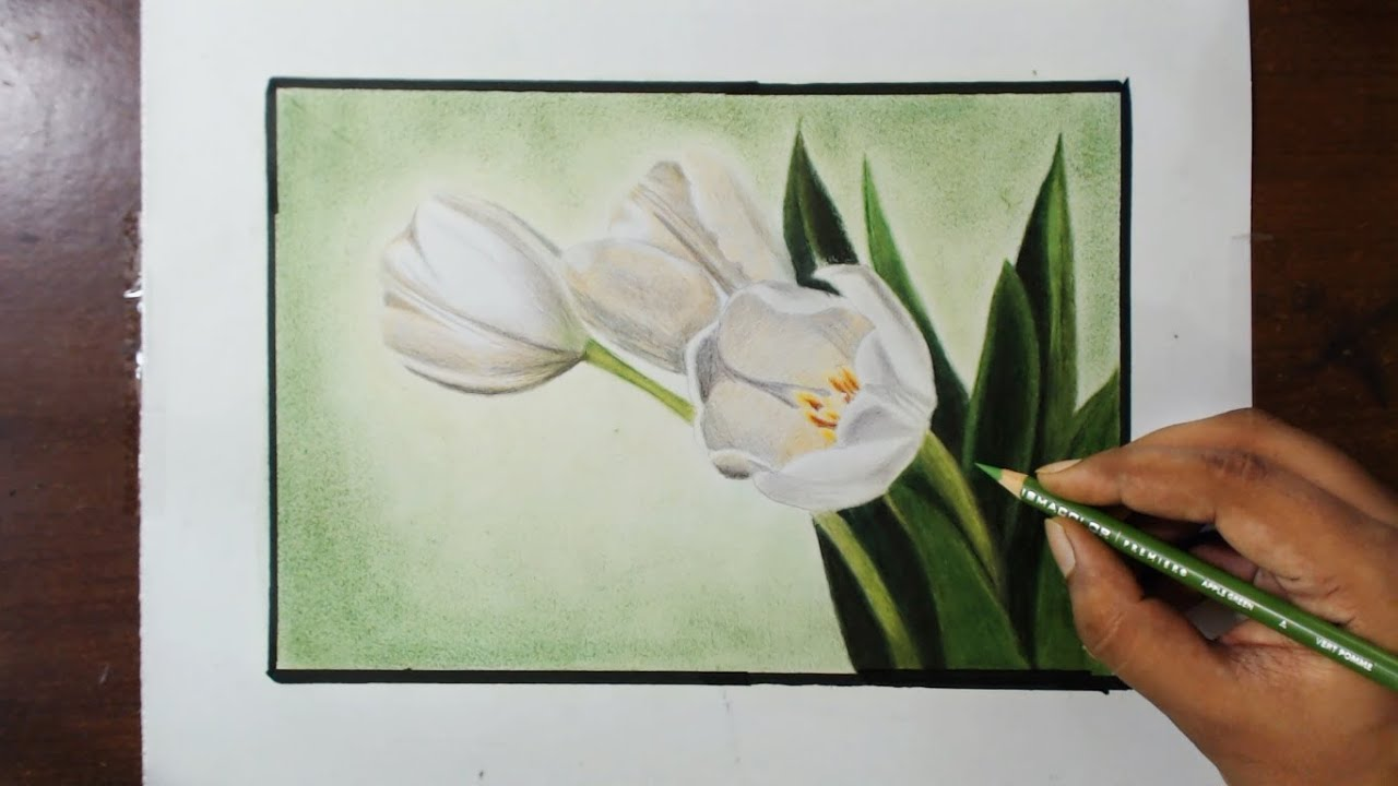 Drawing White Tulips Flower Series 2 Youtube